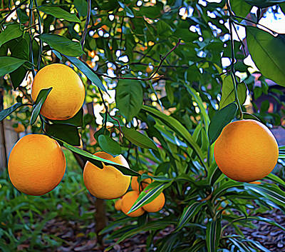 Photograph - Expressionalism Ripe Oranges by Aimee L Maher ALM GALLERY