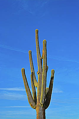 Photograph - Expressionalism Saguaro Cactus by Aimee L Maher ALM GALLERY
