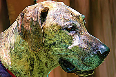 Photograph - Expressionalism Sammy by Aimee L Maher ALM GALLERY
