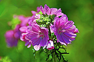 Photograph - Expressionalism Soft And Pretty by Aimee L Maher Photography and Art Visit ALMGallerydotcom