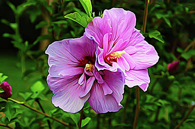 Photograph - Expressionalism Summer Blossom by Aimee L Maher ALM GALLERY