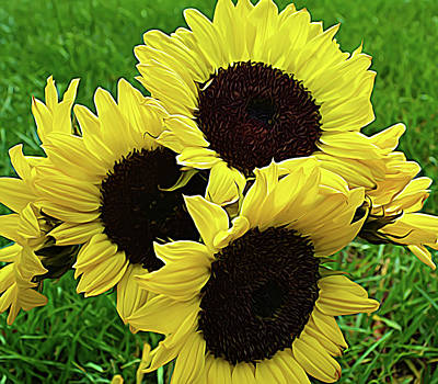 Photograph - Expressionalism Sunflower Bouquet by Aimee L Maher Photography and Art Visit ALMGallerydotcom