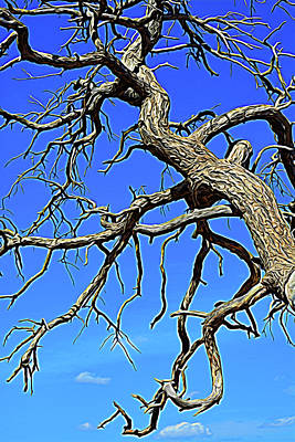 Photograph - Expressionalism Twisted Branches In The Sky by Aimee L Maher ALM GALLERY