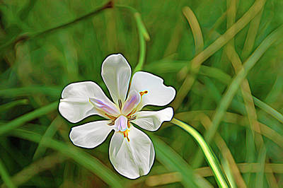 Photograph - Expressionalism White Petals by Aimee L Maher ALM GALLERY