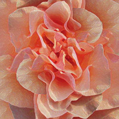Photograph - Expressionist Rose by Michele Avanti
