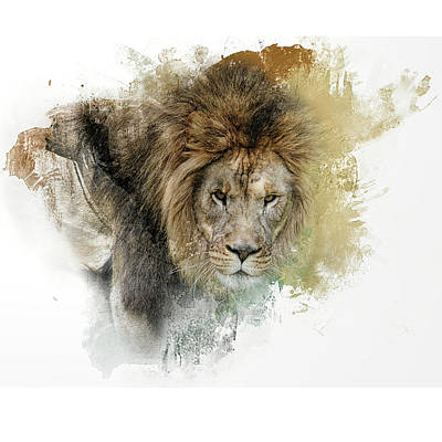 Photograph - Expressions Lion by Jai Johnson