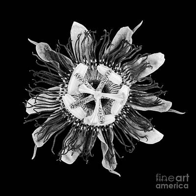 Photograph - Expressive Passion Flower In Black 50674k by Ricardos Creations
