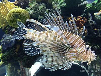 Photograph - Exquisite Fish by Barbara Plattenburg