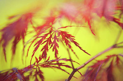 Photograph - Exquisite Patterns Of Lacy Leaves by Jenny Rainbow
