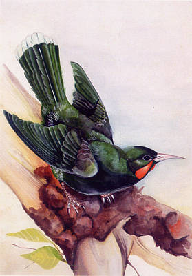 Extinct Birds The Hurais Art Print by Debbie McIntyre