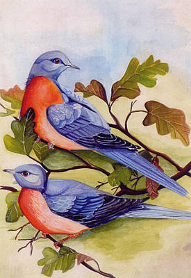 Pigeon Painting - Extinct Birds The Passenger Pigeon by Debbie McIntyre