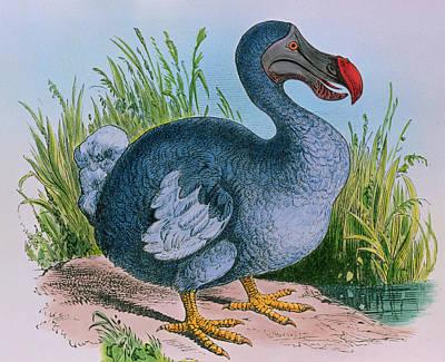 Extinct Dodo Art Print by George Bernard