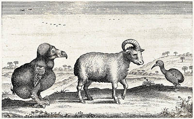 Extinct Dodo, One-horned Sheep, Red Art Print by Wellcome Images