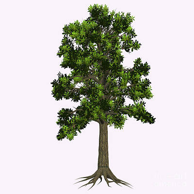 Moody Trees - Extinct Glossopteris Tree by Corey Ford