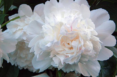 Photograph - Extravagant Peony by Barbara Jacobs