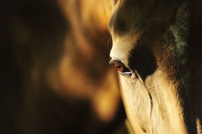Horse Photograph - Eye by Artur Baboev