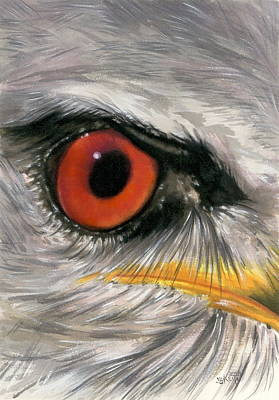Painting - Eye-catching Black-shouldered Kite by Barbara Keith