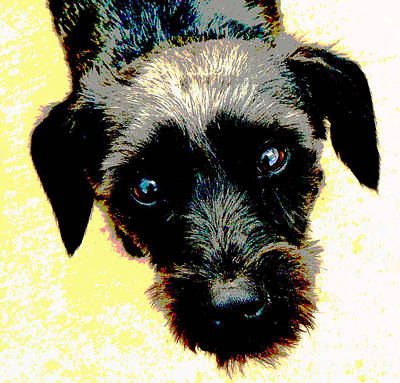 Puppies Mixed Media - Eye Contact by Dorrie Pelzer