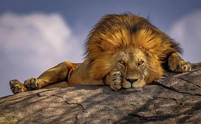 Photograph - Eye Contact- Namiri Plains, Tanzania by Tim Bryan