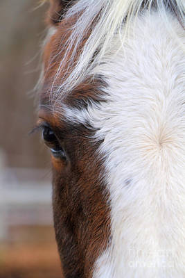 Forelock Photograph - Eye Of A Champion by Elizabeth Dow