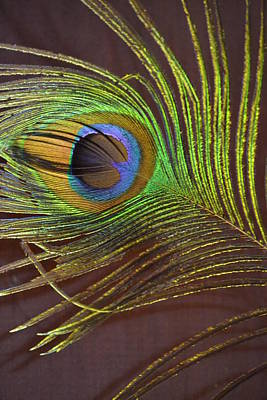 Digital Art - Eye Of A Feather by Joe Bledsoe