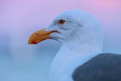 Photograph - Eye Of A Gull by Jonathan Nguyen