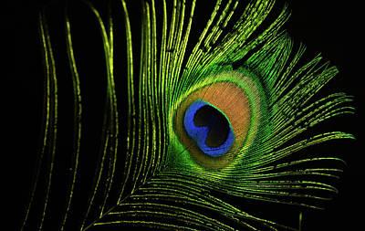Photograph - Eye Of A Peafowl by Douglas Barnett