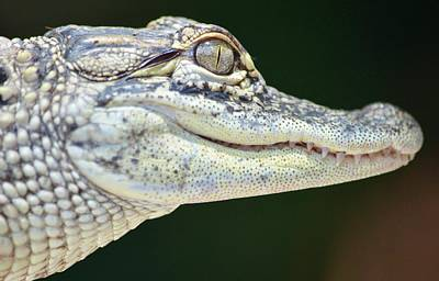 Photograph - Eye Of The Alligator by Richard Bryce and Family