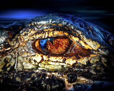 Alligator Photograph - Eye Of The Apex by Mark Andrew Thomas