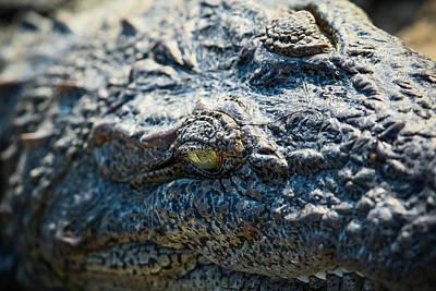Photograph - Eye Of The Beast. by Nila Newsom