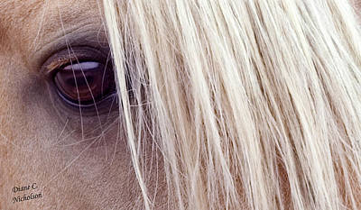 Photograph - Eye Of The Beholder by Diane C Nicholson