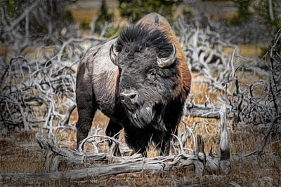 Eye Of The Buffalo Art Print by Donna Kennedy