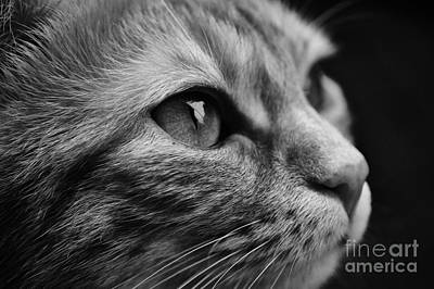 Photograph - Eye Of The Cat by Jesse Watrous