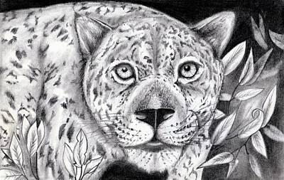 Cheetah Drawing - Eye Of The Cheetah by Joe E