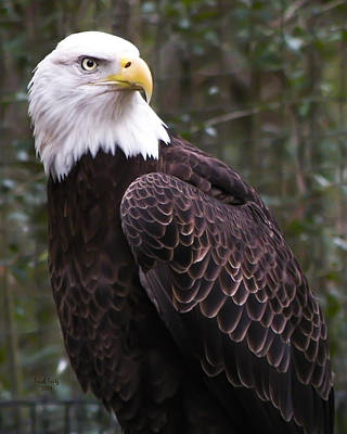 Photograph - Eye Of The Eagle by Trish Tritz