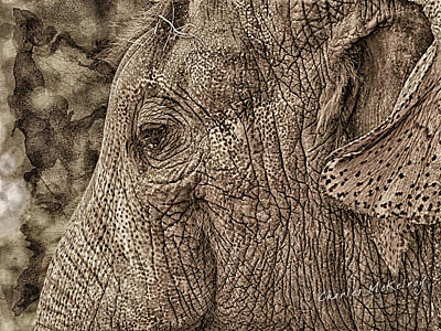 Photograph - Eye Of The Elephant by Charles McKelroy
