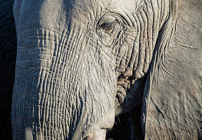 Photograph - Eye Of The Elephant by Fran Gallogly