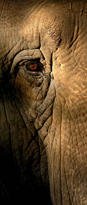 Eye Of The Elephant Art Print by Greg and Chrystal Mimbs
