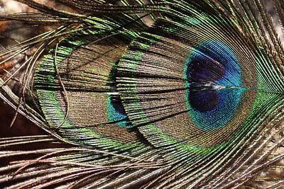 Plume Mixed Media - Eye Of The Feather by Sheryl Chapman Photography