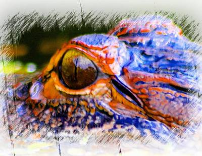 Photograph - Eye Of The Gator by Sheri McLeroy