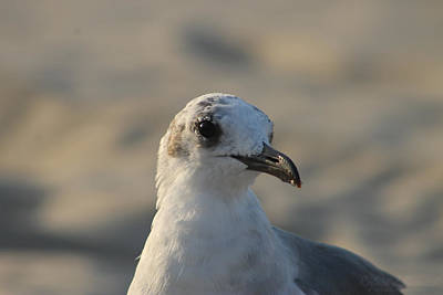 Photograph - Eye Of The Gull by Robert Banach