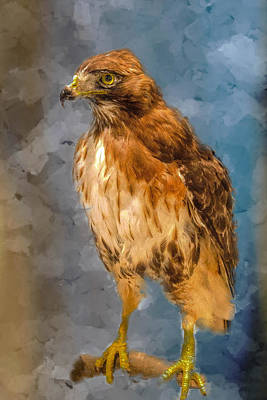 Painting - Eye Of The Hawk by Ches Black