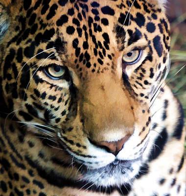 Eye Of The Leopard Art Print