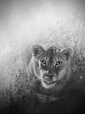 Photograph - Eye Of The Lion by Ches Black