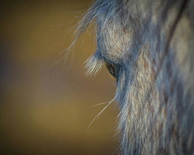Photograph - Eye Of The Mustang by Yeates Photography