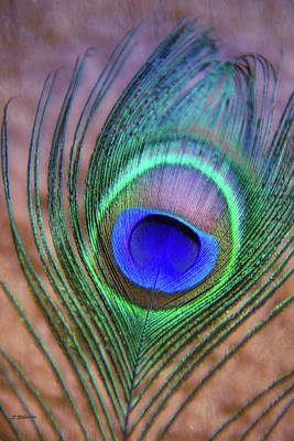Photograph - Eye Of The Peacock by Pamela Williams