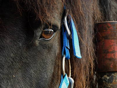 Photograph - Eye Of The Percheron by Julie Pappas