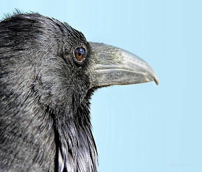 Photograph - Eye Of The Raven by Jennie Marie Schell