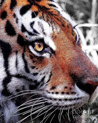 Digital Art - Eye Of The Tiger by Animals Art