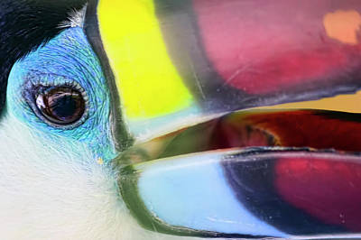 Photograph - Eye Of The Toucan  by Nadia Sanowar